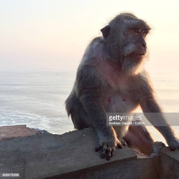 Monkey Sitting On Abandoned Built Structure By Sea