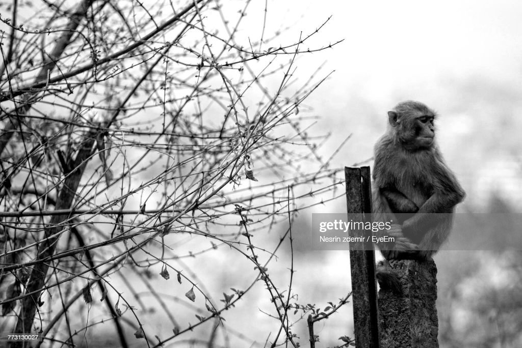 Monkey Sitting On Bollard Against Sky : Stock Photo
