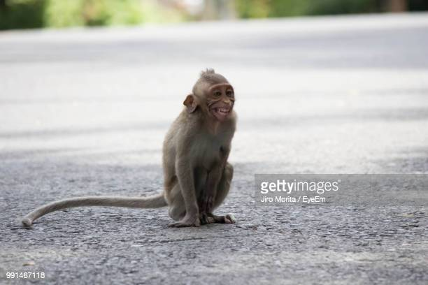 Monkey Sitting On Road
