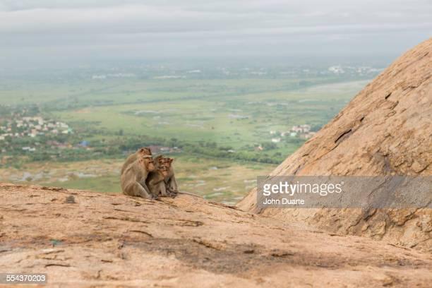 Monkey sitting on rock over rural landscape