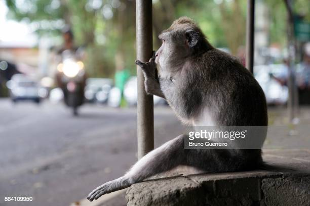 Monkey sitting on side of road looking at commuters passing by