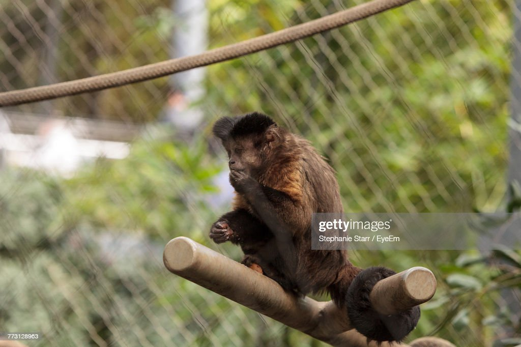 Monkey Sitting On Wood : Stock Photo