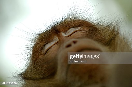 Monkey Sleeping on Tree