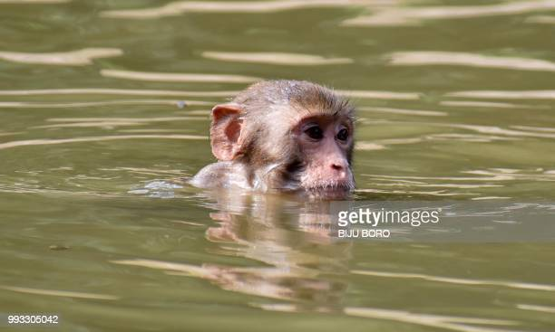 A monkey swims in a waterpool during a hot summer day at Assam State Zoo in Guwahati on July 7 2018