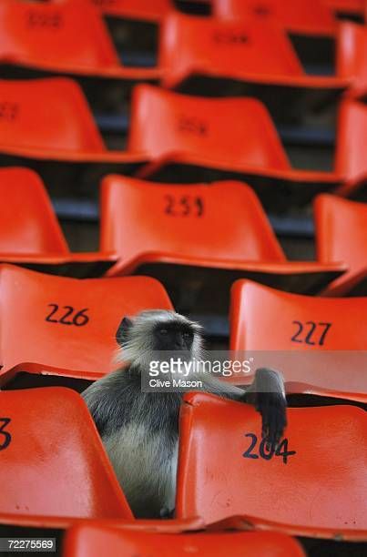 A monkey watches during a practice session ahead of the ICC Champions Trophy match between England and the West Indies at the Sardar Patel Gujrat...