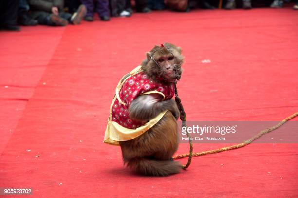 A monkey with a mask and clothing