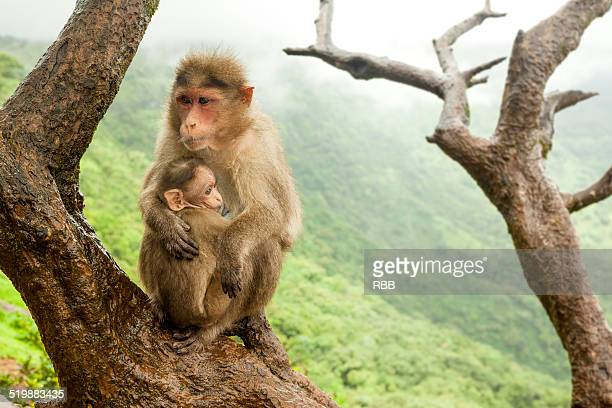 Monkey with its baby