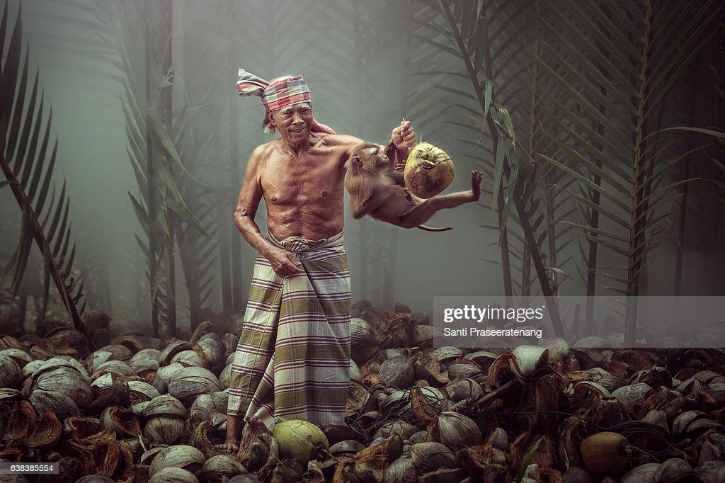Monkey work for human : Stock Photo
