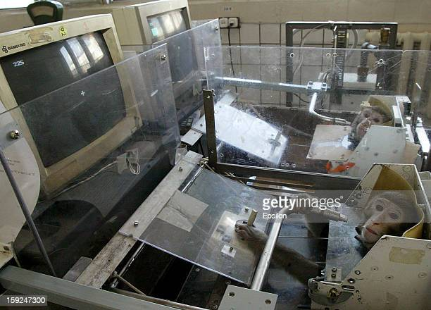 A monkeys during testing at the Medical and Biological Problems Laboratory on April 15 2003 in outside Moscow Russia Russian scientists at the...