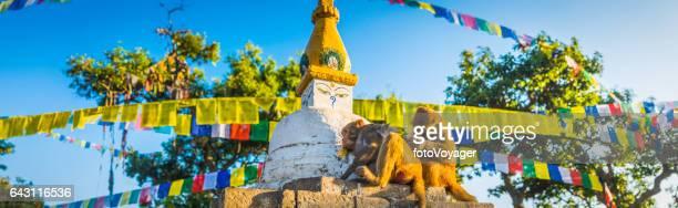 Monkeys grooming Buddhist stupa prayer flags Swayambhunath temple Kathmandu Nepal