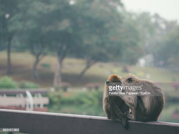 monkeys kissing on railing - ruel stock pictures, royalty-free photos & images
