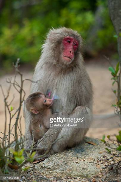 Monkeys on Mountain Trail
