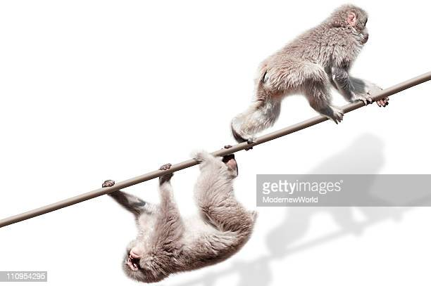 Monkeys on the rope