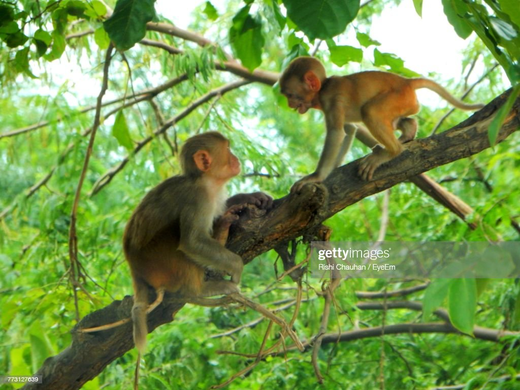 Monkeys On Tree At Forest : Photo