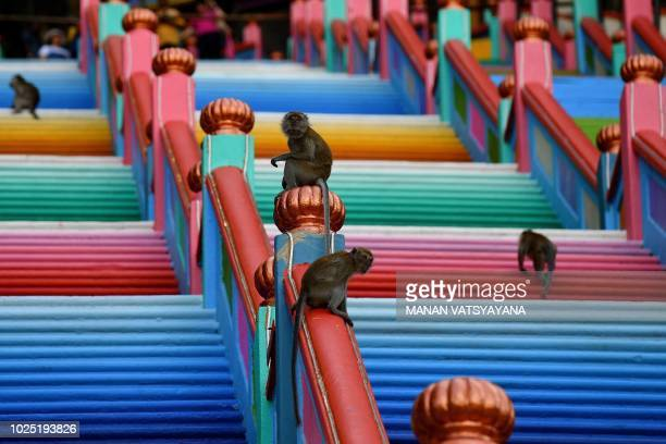 TOPSHOT Monkeys roam around the newlypainted 272steps staircase leading to Malaysia's Batu Caves temple in Kuala Lumpur on August 30 2018