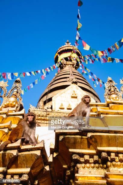 Monkeys roaming at Swayambhunath temple, Nepal