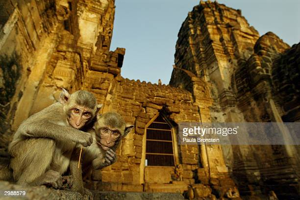 Monkeys sit in front of the Phra Prang Sam Yot temple February 16 2004 in Lopburi Thailand aproximately 160 kilomters north of Bangkok Hundreds of...