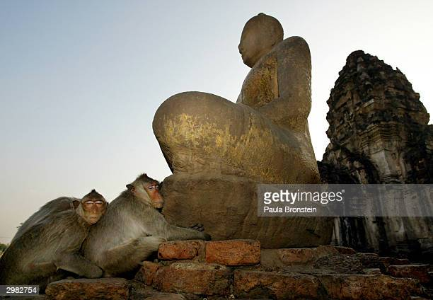 Monkeys sleep together at the foot of the Buddah at the monkey temple called Phra Prang Sam Yot February 14 160 kilomters north of Bangkok in Lopburi...