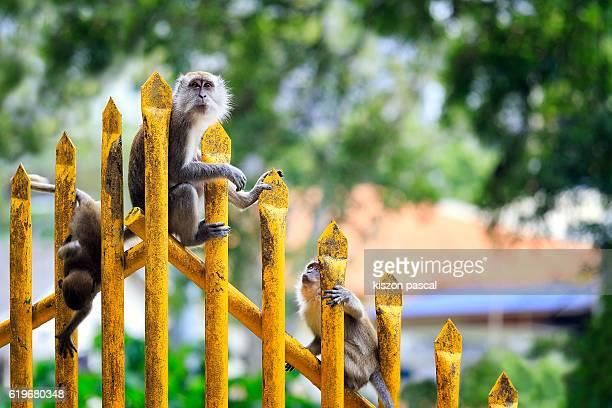 Monkeys standing on the handrail