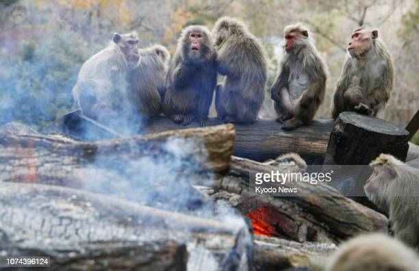 Monkeys warm themselves by a fire at Japan Monkey Center in Inuyama Aichi Prefecture on Dec 19 2018 ==Kyodo