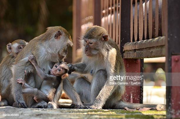 monkeys with infant on footpath - asia carrera imagens e fotografias de stock