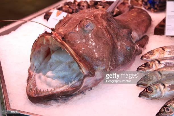 Monkfish displayed on ice of fishmonger stall Mercado San Miguel market Madrid city centre Spain