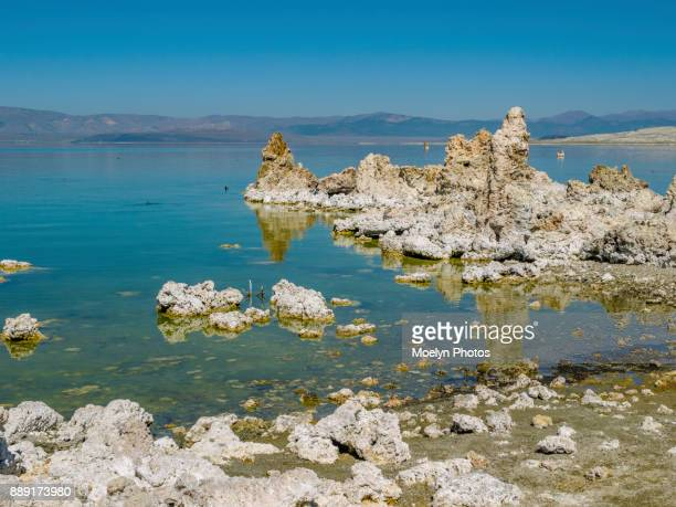 Mono Lake with Birds and Bugs