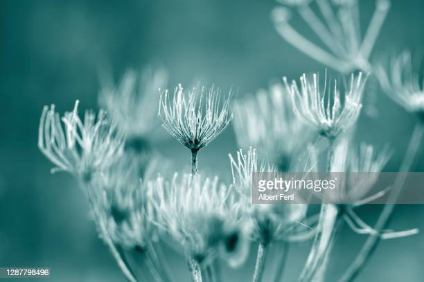 monochrom viii - mint green stock pictures, royalty-free photos & images