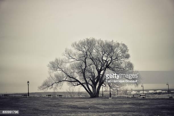Monocrome Tree