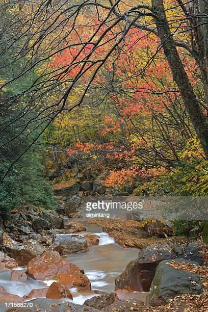 Monongahele River in Fall