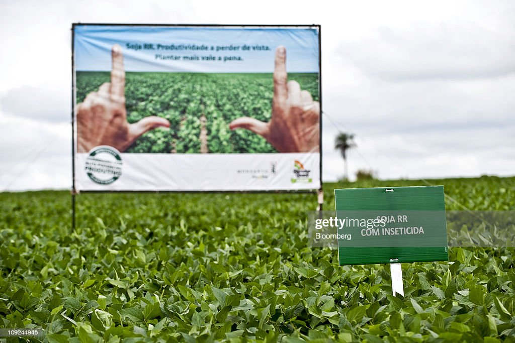 Monsanto Presents Genetically Modified Soybean Variety : News Photo