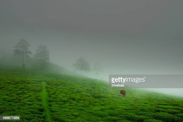 monsoon mood - monsoon stock pictures, royalty-free photos & images