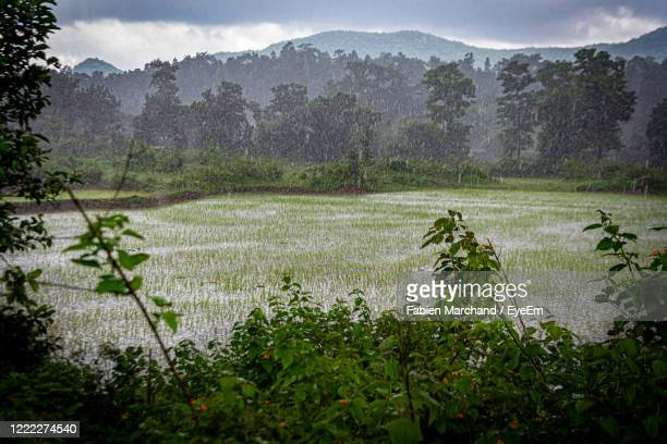 monsoon rain over land against sky - rainy season stock pictures, royalty-free photos & images