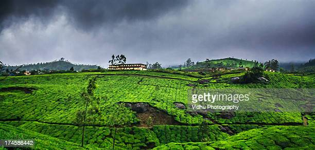 monsoon season in munnar - monsoon stock pictures, royalty-free photos & images