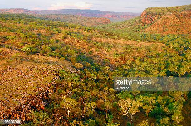 Monsoon woodland valley at dusk and the escarpment of the Phillips Range, Marion Downs Wildlife Sanctuary, northern Western Australia.