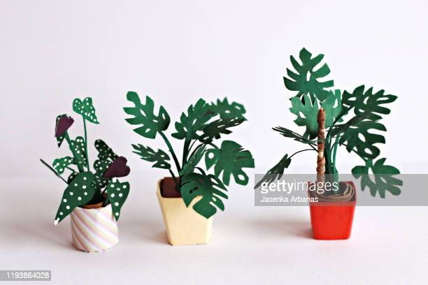 monstera and begonia maculata - begonia stock pictures, royalty-free photos & images