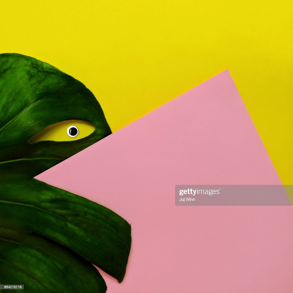 Monstera Leaf Abstract Eye : Stock Photo