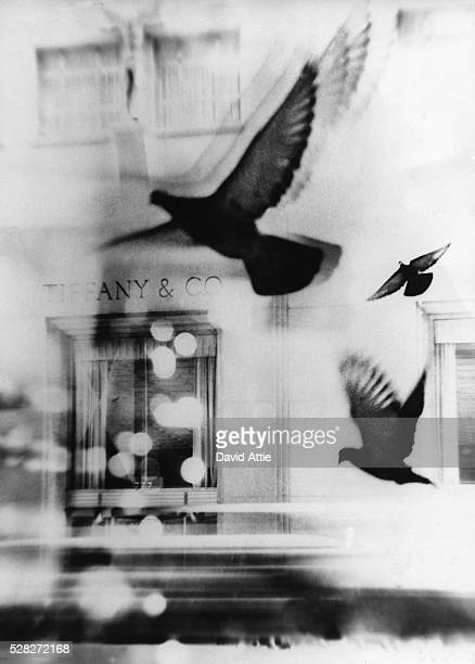 A montage of pigeons in front of Tiffany Co created for the original publication of 'Breakfast at Tiffany's' in 1959 in New York City New York