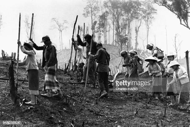 Montagnards Méo cultivant le riz selon une méthode ancienne traditionnelle au Laos en mai 1974