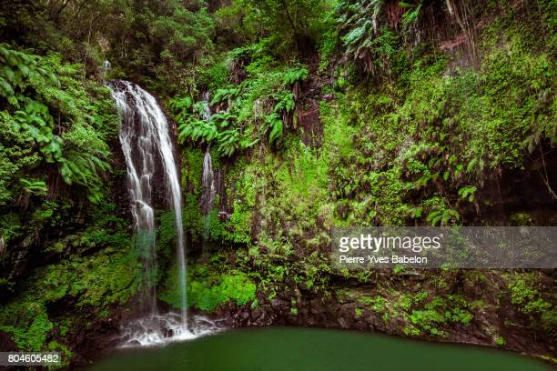 montagne d'ambre - madagascar stock photos and pictures