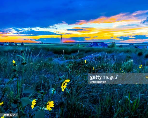 surreal photo montana countryside wildflowers