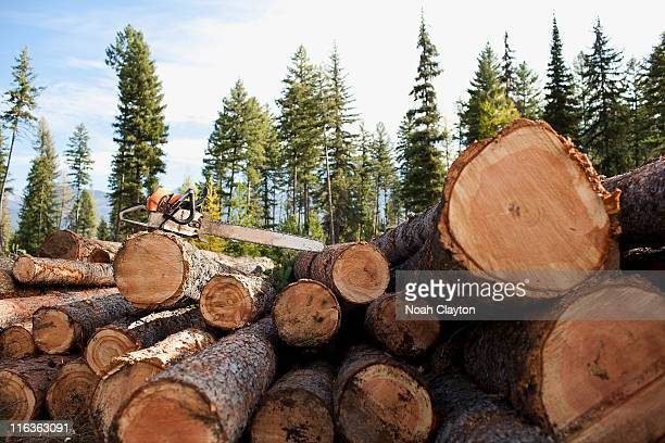 USA, Montana, electric saw on stack of logs