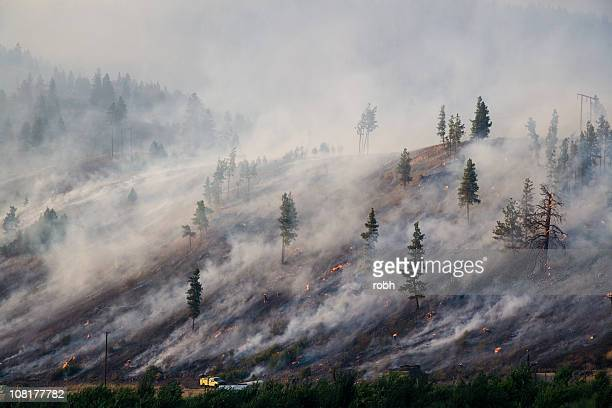Montana Forest Fire 2007 [ 2 Millionth ] archivo de iStock