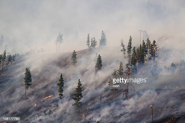 montana forest fire 2007 - wildfire stock photos and pictures