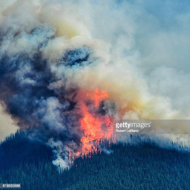 Montana Forest Fire 3
