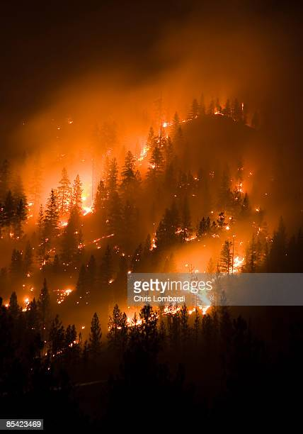 montana forest fire - wildfire stock photos and pictures