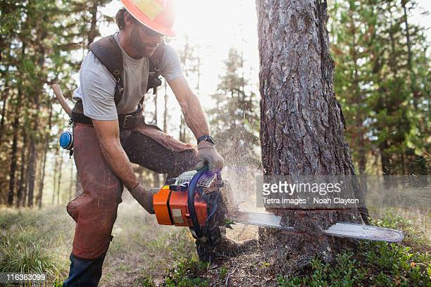 usa, montana, lakeside, lumberjack felling tree - cutting stock pictures, royalty-free photos & images
