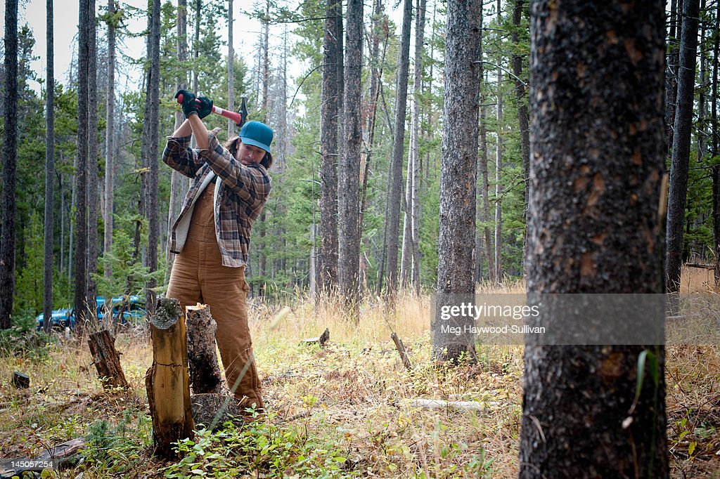 A Montana man chops wood in the forest. : Stock Photo