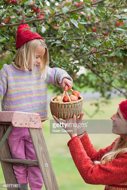 USA, Montana, Whitefish, Mother and daughter picking up apples