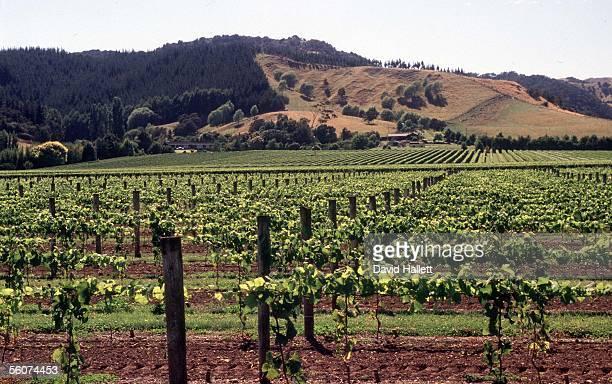 Montana's Orman Estate vineyard on the outskirts of Gisborne
